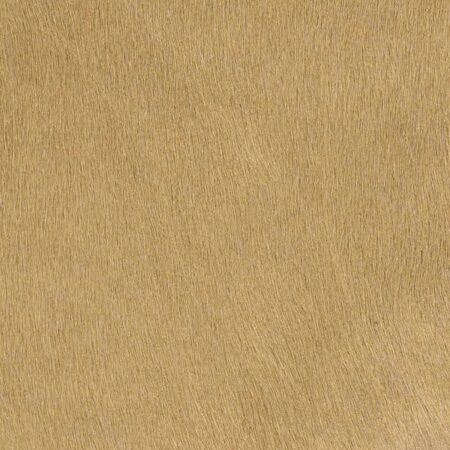 Kuhfell Teppich Champagner Beige