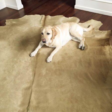 Kuhfell Teppich ca. 5 m² eingefärbt in champagner-beige