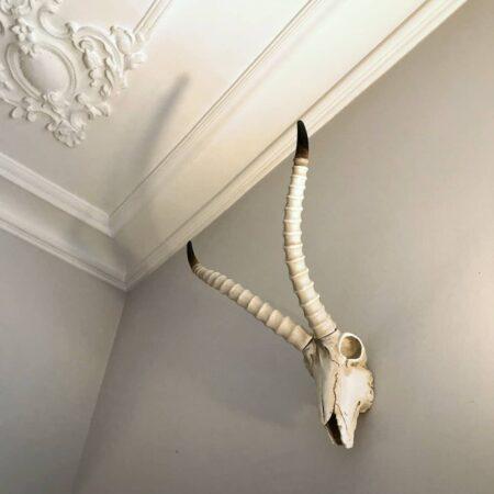 Skulptur SKULL Antilope, Wandornament