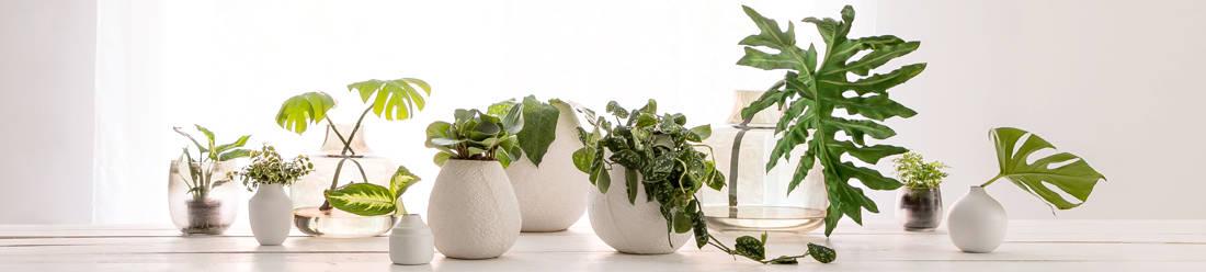 Vasen - Dekoration von Light & Living